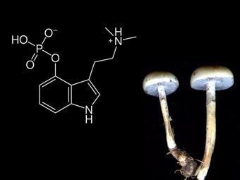 эффекты псилоцибина