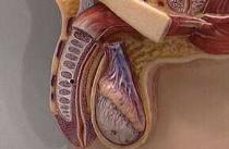 Заморозку спермы с целью последующего оплодотворения может потеснить новый