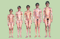 Увеличение члена из за тестостерона