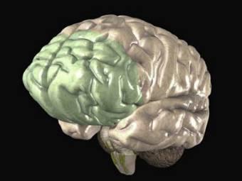 уменьшение мозга