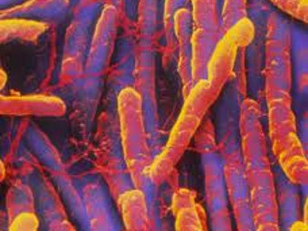 резистентные бактерии