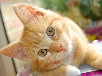пяти финским кошкам присудили звание героя спасение хозяев