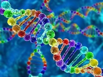 обнаружено импринтированных генов