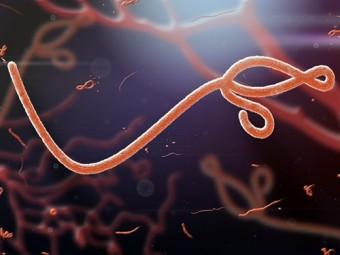 либерии зафиксирован случай заболевания лихорадкой эбола