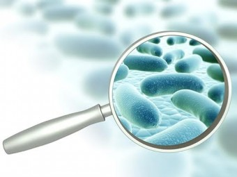 выявлена зависимость составом кишечной микрофлоры развитием диабета