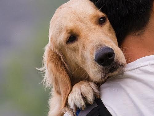 Ученые: Собаки подвержены серьезным болезням из-за их одомашнивания