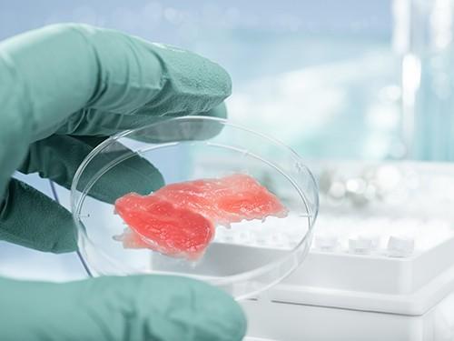 Мясо начнут выращивать в лабораториях