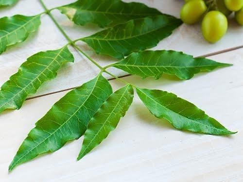 Растительный экстракт против рака поджелудочной железы