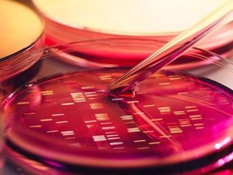 создан микроорганизм минимумом генов