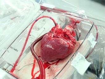 базе военного госпиталя создадут центр трансплантации сердца