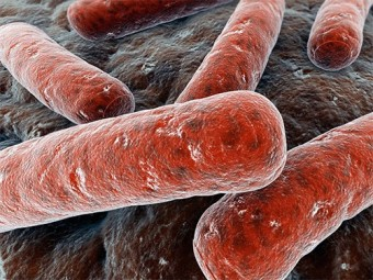 петербурге работницы детсада обнаружили туберкулез