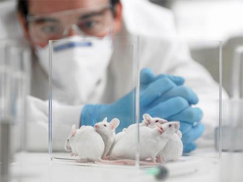 Мышей вылечили от Альцгеймера за неделю