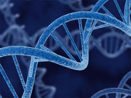 Элизабет Пэрриш (Elizabeth Parrish) стала первой в мире пациенткой, на которой успешно была испытана «омолаживающая» генная терапия. Об том, что эксперимент прошел удачно сообщила сама Пэрриш. Она является руководителем компании BioViva, проводившей исследования.