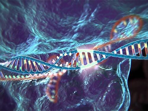 Cистему поредактированию генома человека впервый раз используют влечебных целях