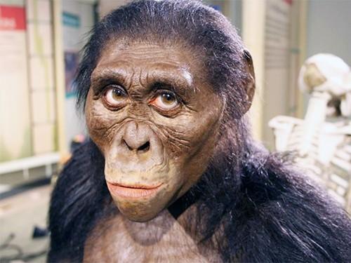 Ученые поведали, отчего погибла прамать человечества «Люси»