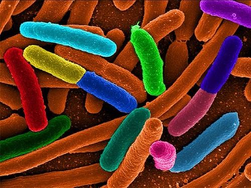 Суперустойчивые бактерии стали нечувствительны кантибиотикам последней линии