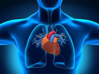 ученые нашли молекулу сдерживающую чрезмерный рост сердца