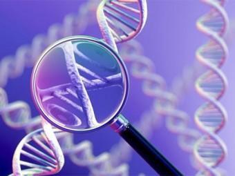 найден генов аутизма снижающий активность мозга