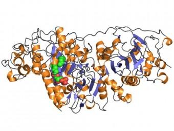 биомаркер мозге указывает наличие диабета болезни альцгеймера