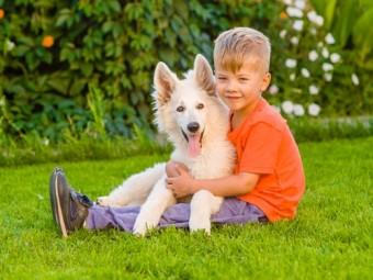 собаки помогают детям справиться стрессом родители