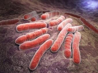 иммунотерапия поможет против туберкулеза
