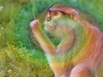 прививка героина испытана обезьянах людям