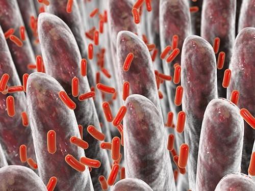 shutterstock 400088722s0 500x375 Кишечные бактерии влияют наэмоции человека— Ученые