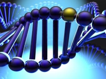 Немецкие ученые обнаружили ген альтруизма