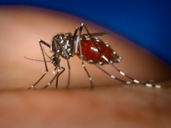 лихорадка денге