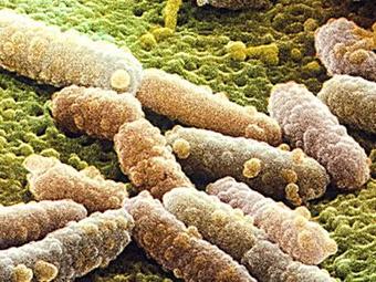 Под микроскопом фото с сайта scavengergourmet