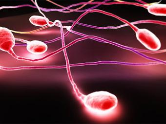bryunetok-seks-kartinki-spermatozoid