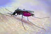 Пептиды модифицированные комары кленбутерол купить в аптеке таблетки без рецептов