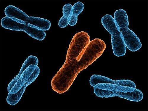 Утрата Y-хромосомы связана сболезнью Альцгеймера